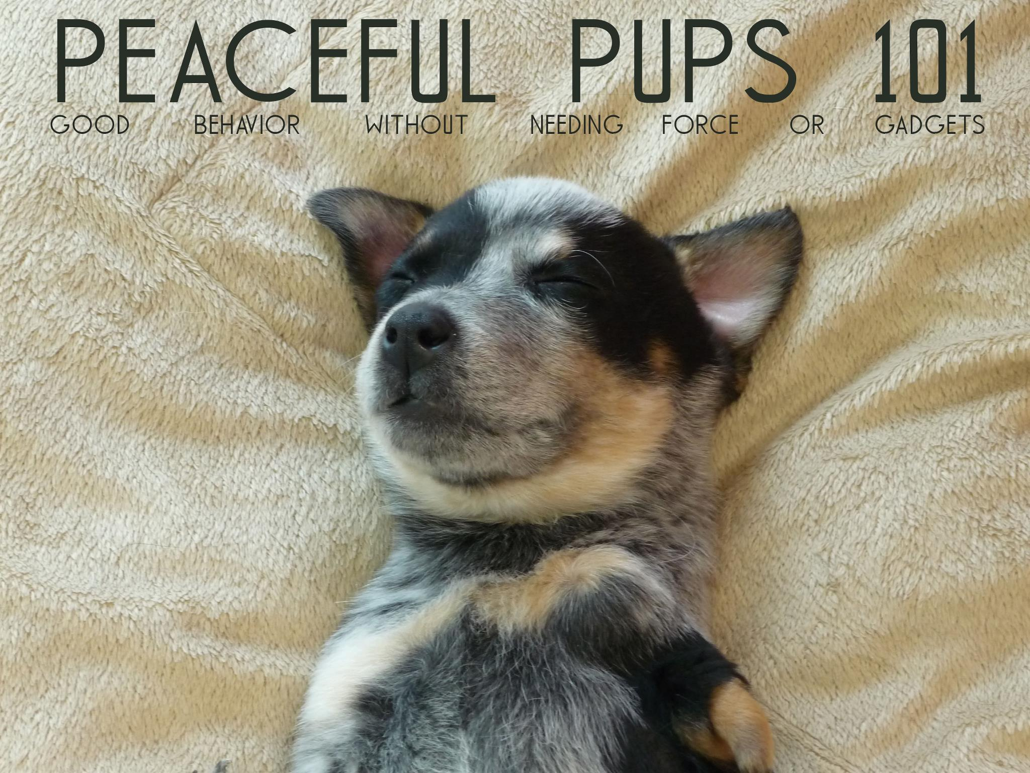 Peaceful Pups 101
